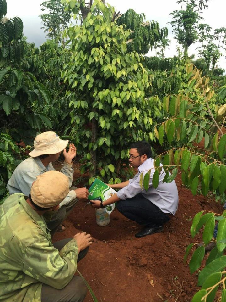 pH đất với sức khỏe cây trồng