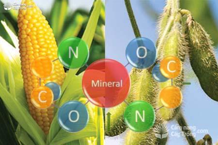 CHELATE trong dinh dưỡng cây trồng