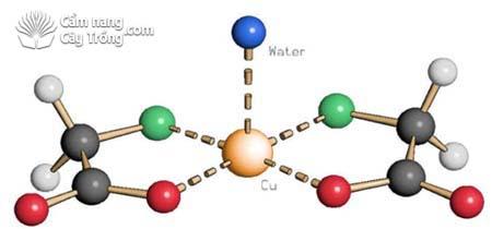Tầm quan trọng của vi lượng chelate 3